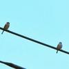 娘と茶系の小鳥と