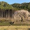 枝垂れ桜×スーパームーン