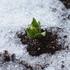 雪とベランダの植物