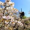 【京都】【御朱印】『仁和寺』の御室桜を見に行ってきました。 京都観光 京都旅行 女子旅 主婦ブログ 京都桜