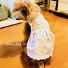 犬の夏のお洋服公開!かわいいお昼寝動画あり。