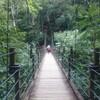 【高尾山】4号路下り~歩きやすい吊り橋コース~