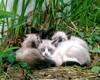 猫のアイキャッチ画像の話と、ブログの近況報告です