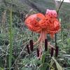 【礼文島】ここでしか見れない?不思議な夏の花写真11選