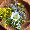 花に誘われモイスト・ポプリ作り