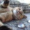 10月後半の #ねこ #cat #猫 その1
