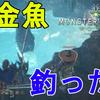 【MHW】黄金魚、小金魚釣ってみた!釣れる場所などについて解説!楽に金稼ぎ!【モンスターハンターワールド/解説動画】