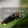 ワークショップ[ホタル観賞会]