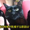 猫の肉球が乾燥する原因は?対策やケアの方法は?