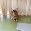 ウサギのちまき今日の1枚『どっち?』