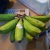 南西諸島の色々な島の島バナナを食べた話1「沖永良部島のバナナ」