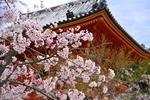 桜も紅葉も満喫!観光シーズンの京都を、混雑を避けて楽しむ5つのコツ