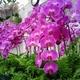 【グルメ】マレーシアで美しい胡蝶蘭に囲まれて楽しむアフタヌーンティー 予約の方法と当日レポートを一挙ご紹介!