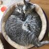 我が家のお猫様2匹がそろそろ1歳