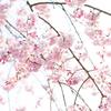 自然の生命を感じるお菓子。春なら?