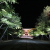 仁和寺の「青もみじライトアップ」を見てきました
