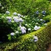 【見頃や混雑状況は?】 北鎌倉のあじさい寺・明月院に咲き乱れる美しい明月院ブルー!