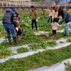 やまなし子ども食堂グループの皆様に野菜収穫体験をして頂きました