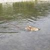 犬かきの夏、泳ぐ柴子
