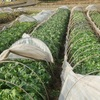 農園日誌Ⅲーむかし野菜の四季