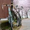 お花見ポタリング #自転車