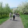ドイツ、歩く楽しみ ヴィッツェンハウゼン 2