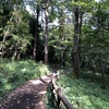 泉から林間へ歩く