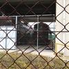 シュロをめぐる民俗誌ー和歌山県海南市・有田川町における事例ー