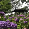 アジサイが蜜です!多摩川八景に選定された景色が観られる公園【多摩川台公園】