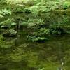 京都・西方寺(苔寺)ー世界遺産