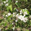 「リンゴの花が満開で心地よいのです。が問題もあるのです。」 - Longhorn beetle