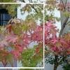 季節のお便り ~秋~