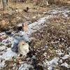 落ち葉と雪のドッグラン