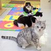 猫好きにはたまらない隠れスポット「ねこコレ」 新潟駅前店