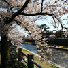 大阪郊外、お薦め花見スポット