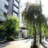 しだれ柳が青々とキレイです!夏の風にそよぐ柳通り 東京メトロ千駄木駅徒歩1分
