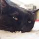 今日の黒猫モモ&白黒猫ナナの動画ー741