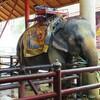 タイ旅行④  象さんのショーを満喫とホテルのコンセント事情