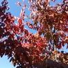 午前中は小春日和!午後からは風が強かった?冷たい風だ!