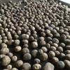 キタアカリ(じゃがいも)収穫