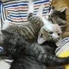 【保護猫】捨て猫が増える時期です ~良い飼い主さんに出会えますように~