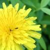 蟻の習性2:6:2でニート主婦Kは働かない人のグループに属する