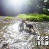 水嫌いのまめうにが川を渡った~~~!!!