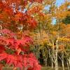 【函館・笹流ダム前庭広場】秋は多くの市民が訪れる紅葉の名所!10月下旬の紅葉の具合は?