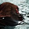 落ち葉の写真