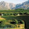 バイタリティ溢れる!南アフリカのワイナリー,スターク・コンデ・ワイン