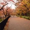 【西宮七園ガイド】香櫨園