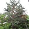 庭木の作業を通して思ったこと。