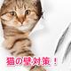 猫と賃貸で暮らす♪壁対策や退去費用はどうなの?