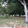 天久ちゅらまち公園  木陰ベンチあり「沖縄 那覇の公園」